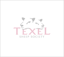 texel-show-blank_118 v58.png