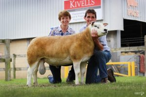 Texels to 1500gns at South West NSA Sale