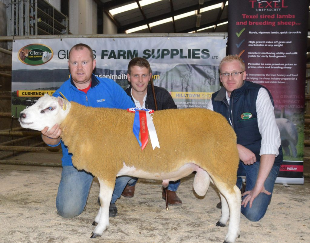 Top call of 700gns at Armoy NI Club Sale
