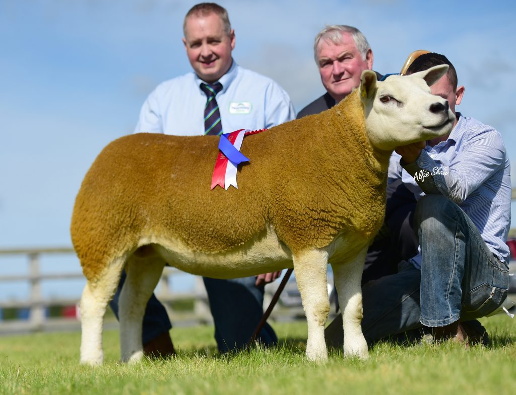 Balmoral sale sees gimmer lead at 2200gns