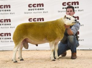 Averages up at Northern Area Club Sale