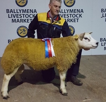 Champion leads Ballymena Harvest sale at 3000gns