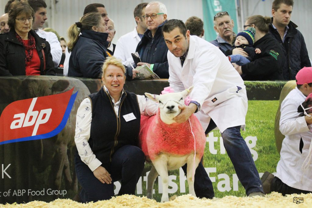 Texel tops 'Pink Sheep' charity auction