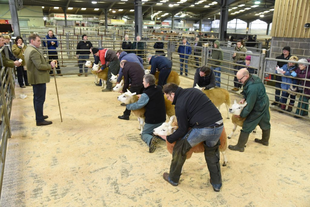 Northern Area in-lamb sale peaks at 700gns