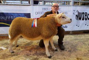 NWTBC Beeston in-lamb sale sees 4100gns peak