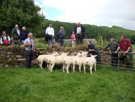 South Wales Texel Breeders Club AGM