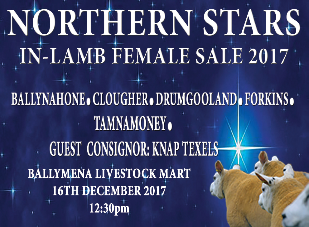 New 19,000gns NI female record at Northern Stars sale