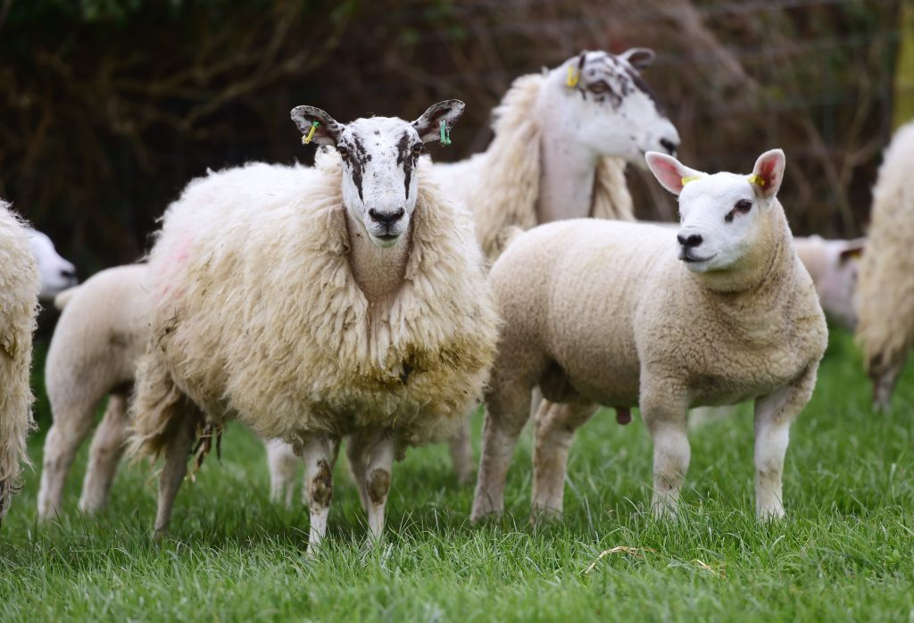 Warning over newer anthelmintic group resistance