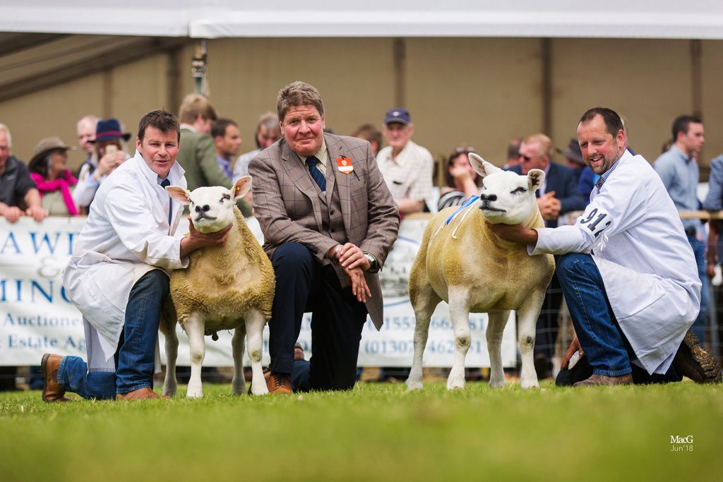 Haddo tup lamb leads Royal Highland line up
