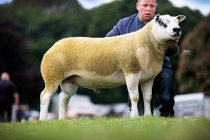 Awesome day for Garngour flock as Texels lead Kelso with £29,000 topper