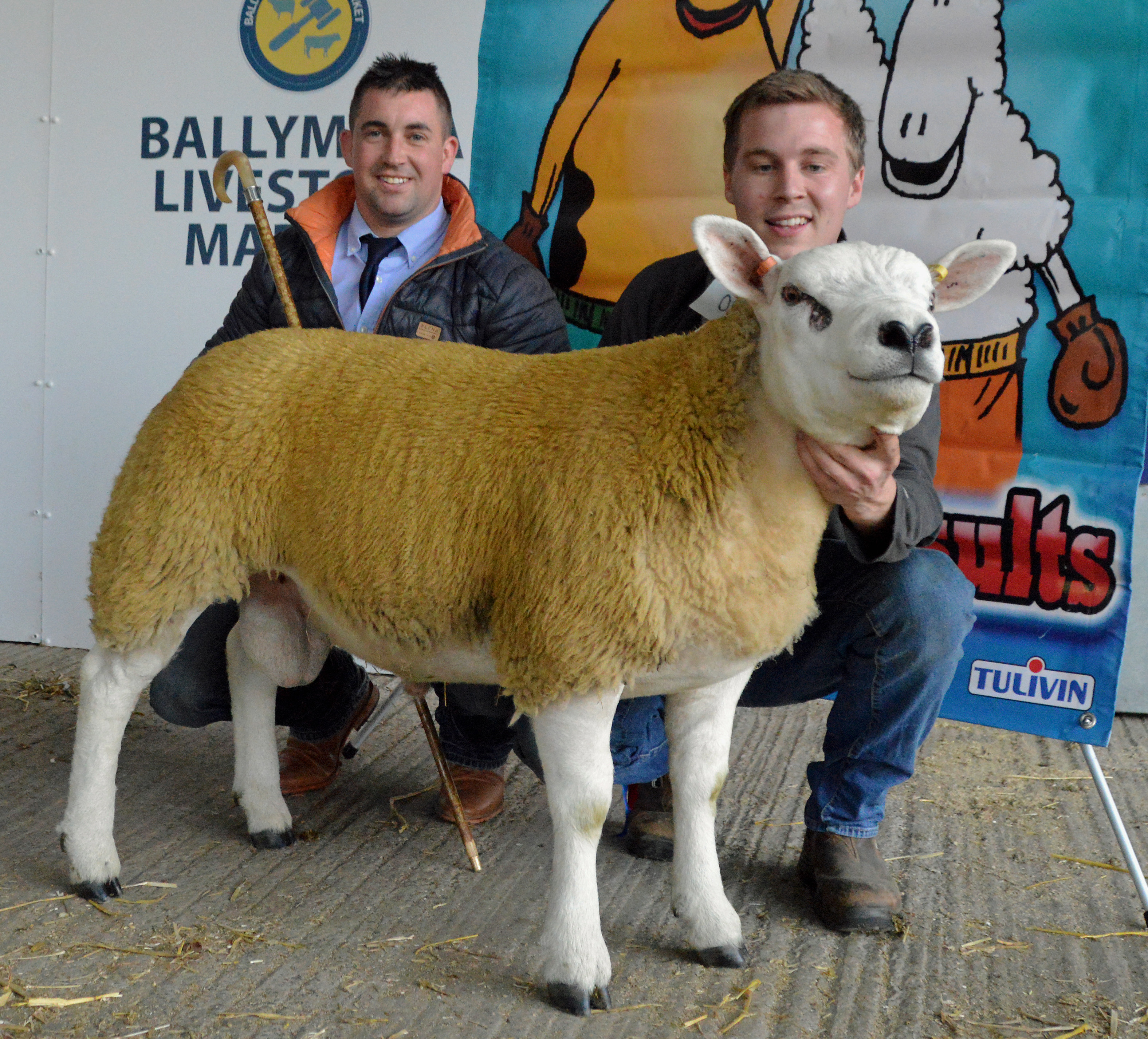 Kiltarriff champion leads NITBC Ballymena sale at 2000gns
