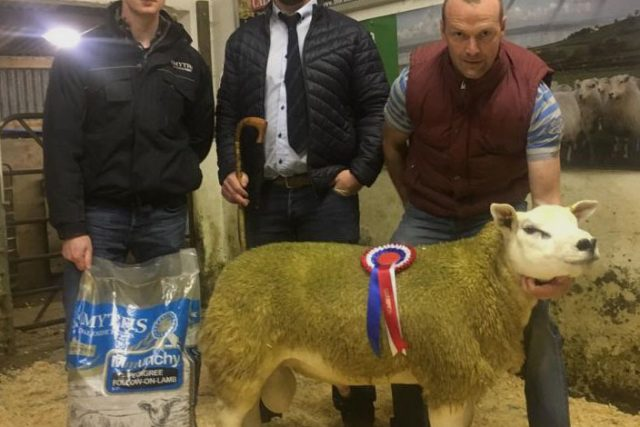 Drumderg lamb leads Gortin Sale at 720gns