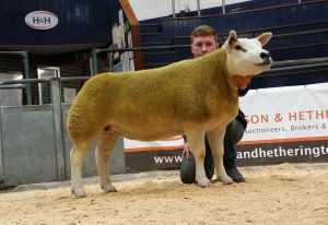Sportsmans gimmer hits 14,000gns at Christmas Stars Sale